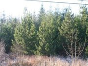 For Sale: At Claremount,  Oughterard,  Galway. Forestry Plantation