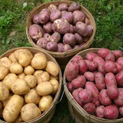 iugvf, cvc Irish Potatoes for sale by your own quelity
